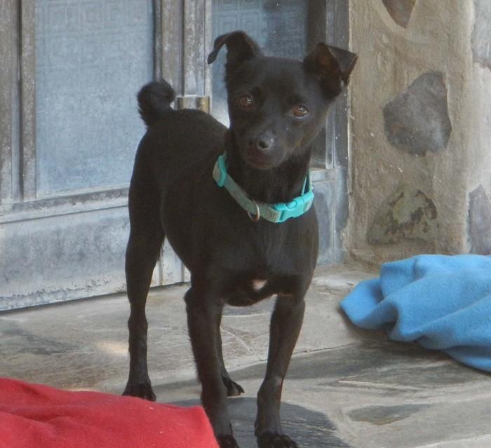 hundevermittlung dieser hund sucht dringend ein. Black Bedroom Furniture Sets. Home Design Ideas